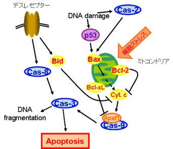 日本大学理工学部物質応用化学科 生物資源化学研究室